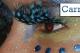 sitges-carnaval-carnival-5